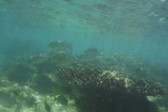 coral-sri-lanka