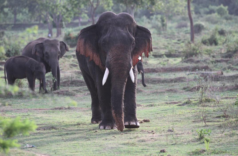 kalawewa-national-park-safari
