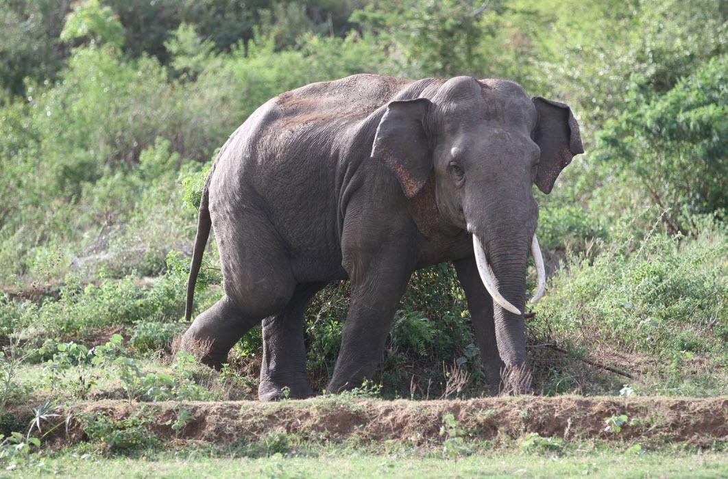 kalawewa-national-park-sr-lanka