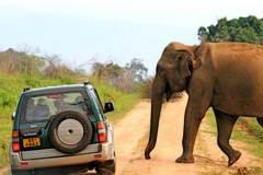 safari-in-sri-lanka-16