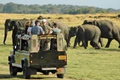 safari-in-sri-lanka-19