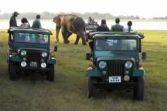 safari-in-sri-lanka-22