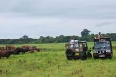 safari-in-sri-lanka-7